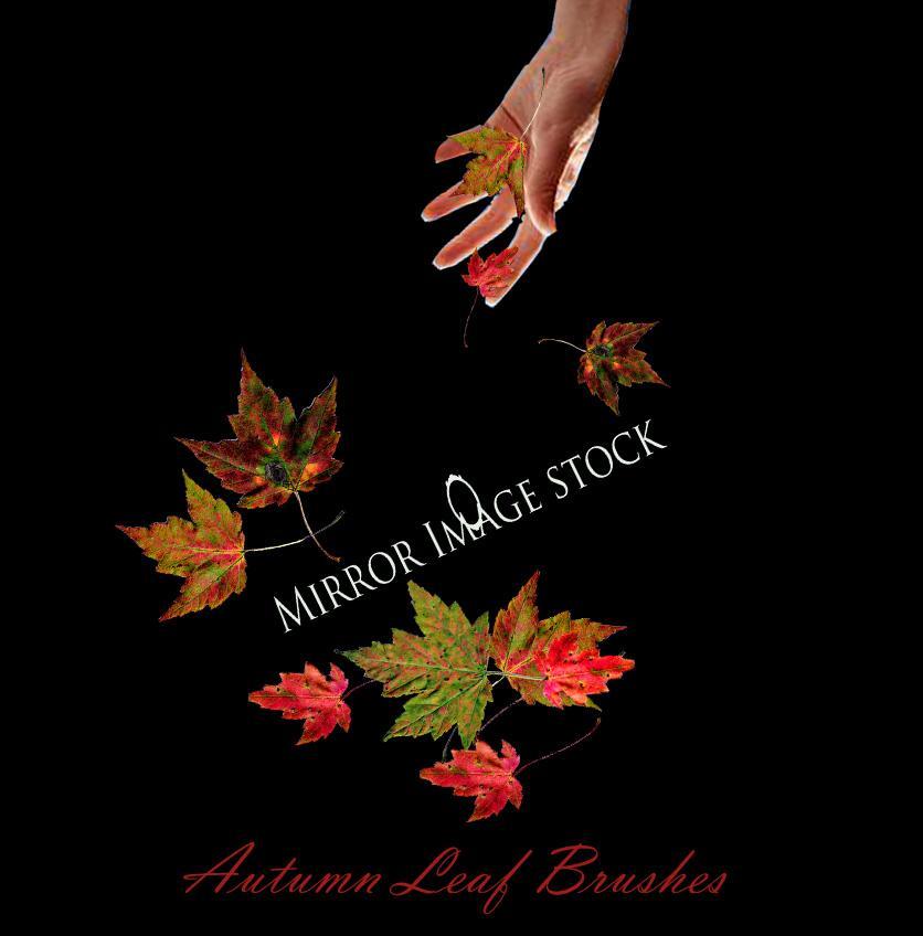 Autumn Leaf Brushes