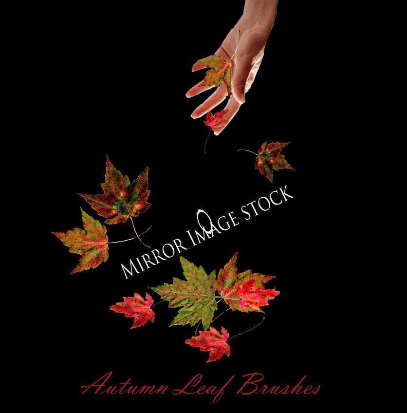 Autumn Leaf Brushes by mirrorimagestock