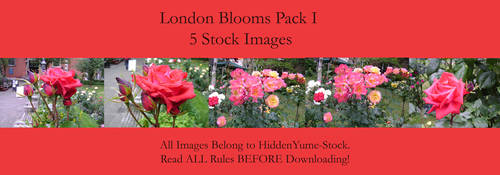 London Blooms I