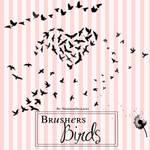 Brusher Birds