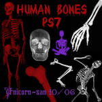 Human Bones Brush Set