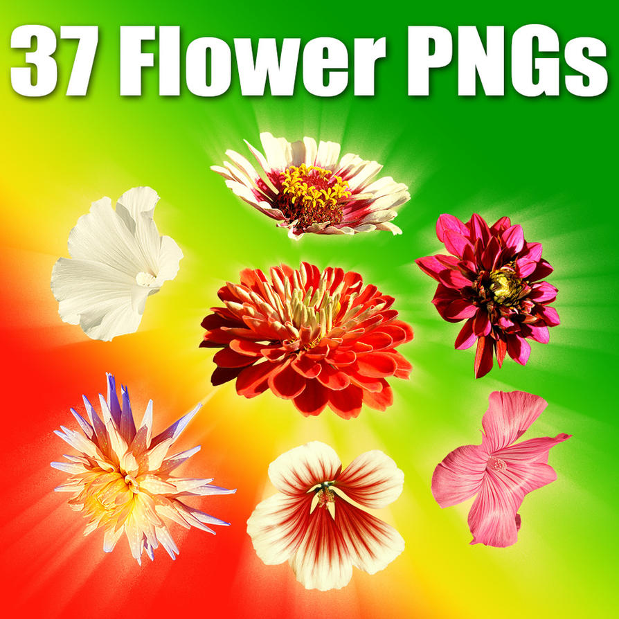 37 High-Res Flower PNGs by XResch
