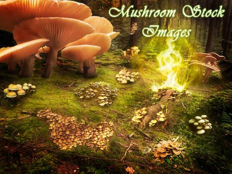 30 Mushroom Stock Images
