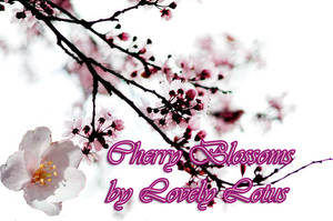 Cherry Blossoms by LovelyLotus