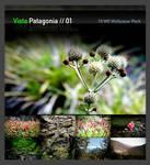 Vista Patagonia Pack 1