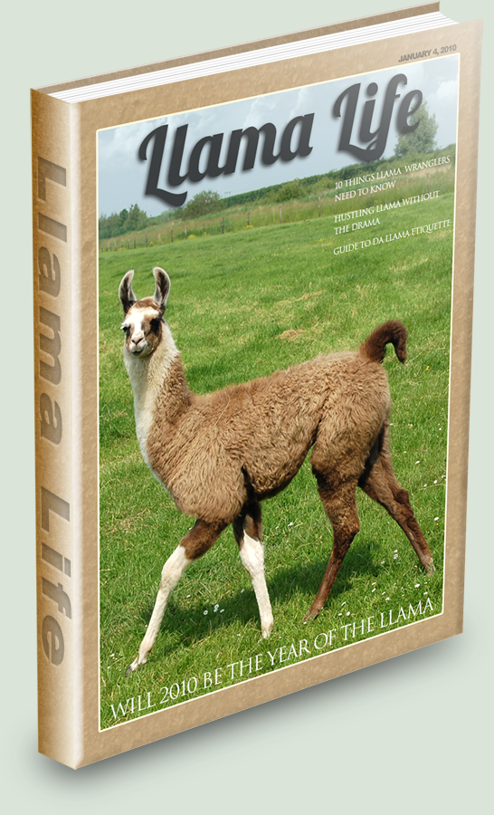 The Llama Hustle by CigsAce