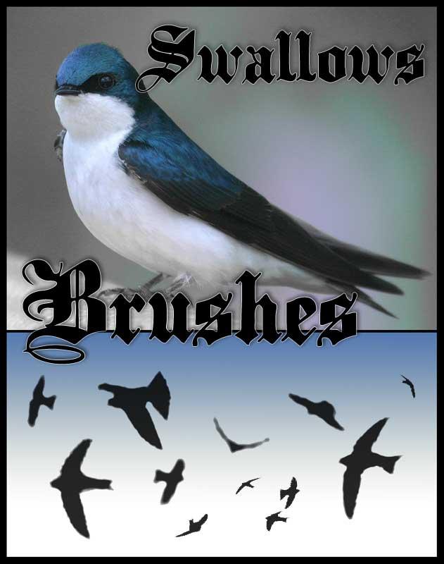 Swallows Photoshop Brushes