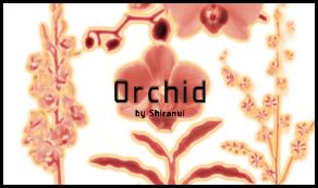 Princess Phalaenopsis by Shiranui