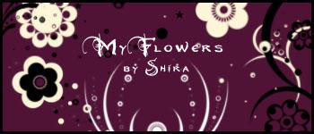 My Flowers by Shiranui