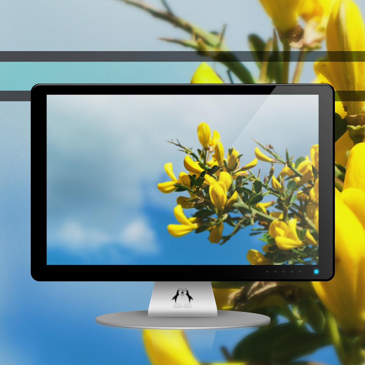 Floraison by Momez