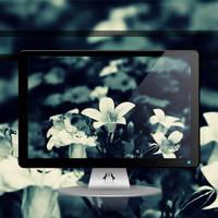 Black Bloom by Momez