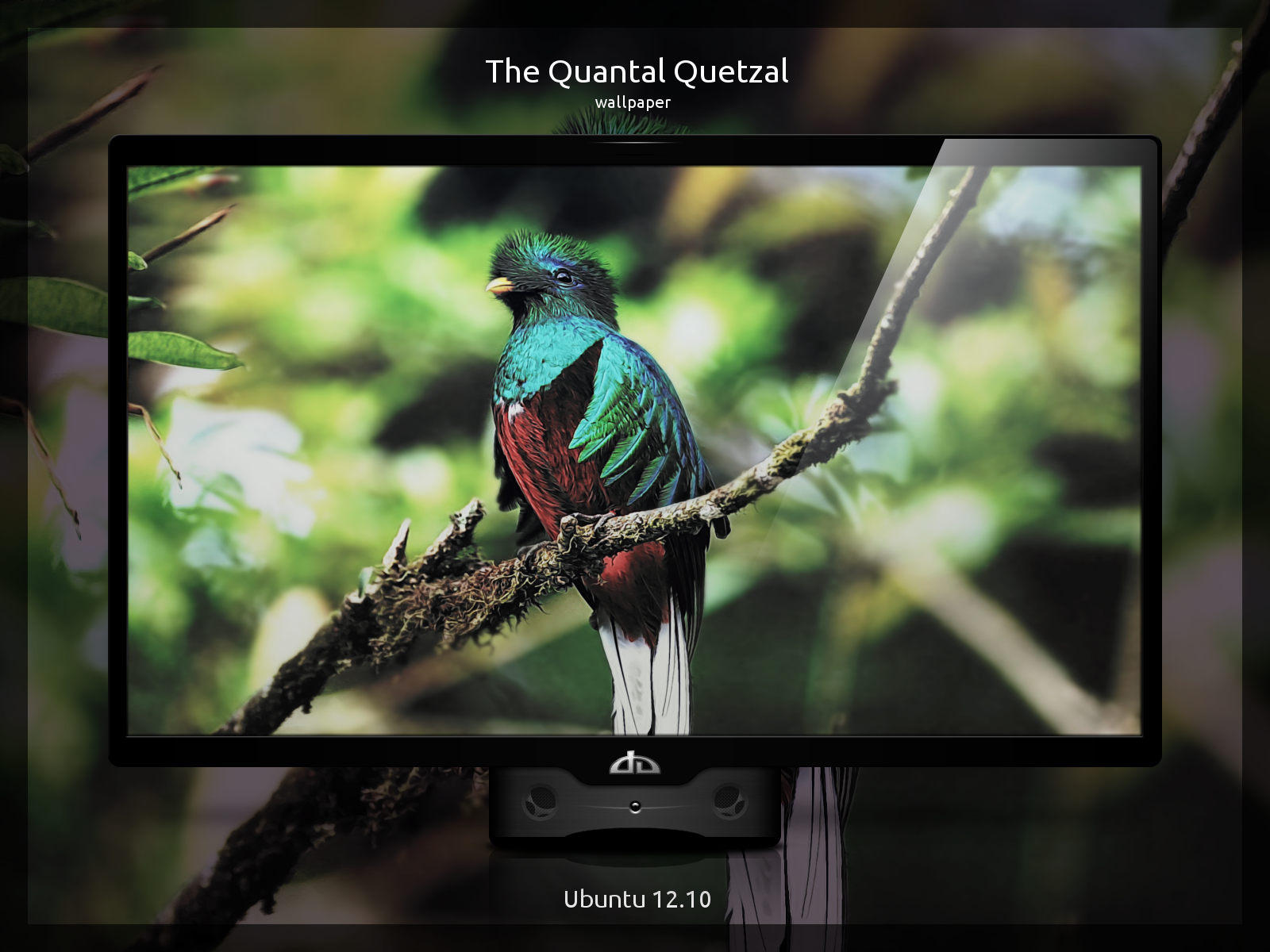 The Quantal Quetzal by Momez