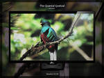The Quantal Quetzal