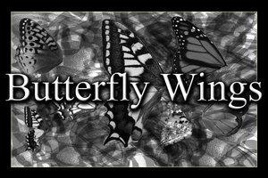 Butterfly Wings Brush by Beautifulworld-stock
