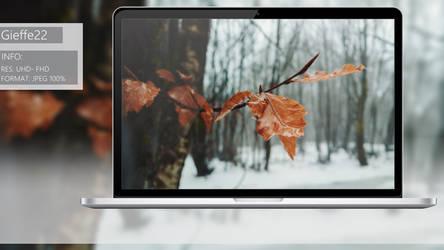 Snowy leaf by gieffe22