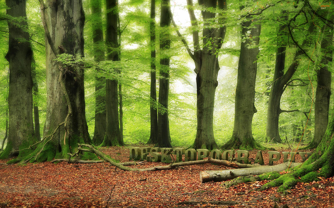 Woodland by zilla774