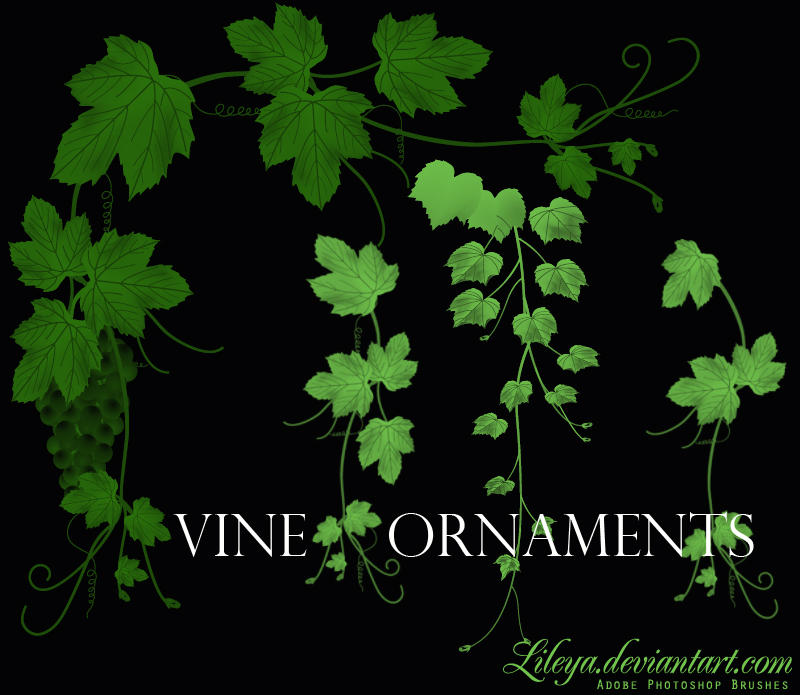 http://fc04.deviantart.net/fs71/i/2010/210/8/c/Vine_Ornaments_by_Lileya.jpg