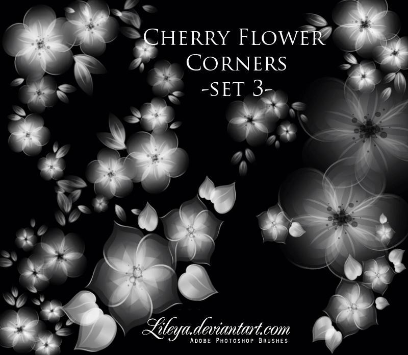 فرش فوتوشوب ناردة وجديدة 2010 Cherry_Flower_corners_by_Lileya