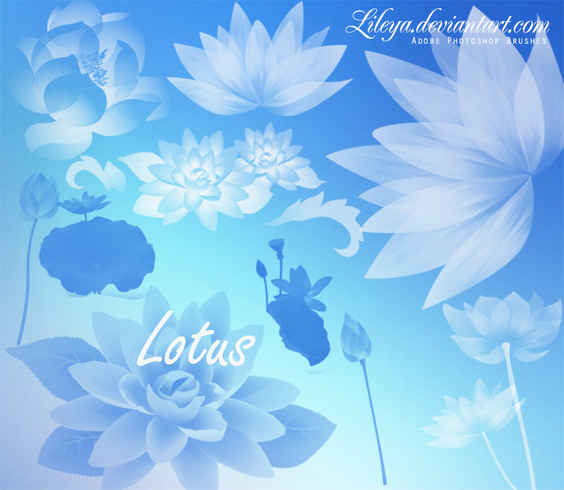 Lotus By Lileya On Deviantart