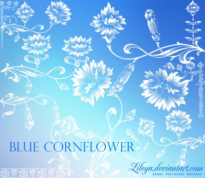 Blue Cornflower by Lileya
