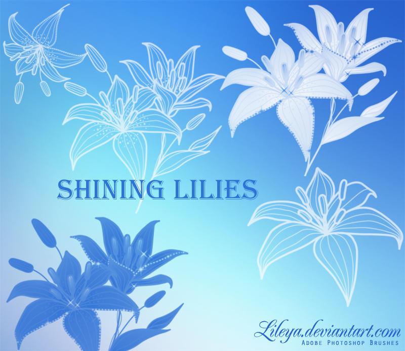 Shining Lilies by Lileya