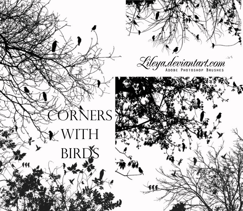 Corners with Birds by Lileya