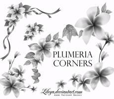Plumeria Corners by Lileya