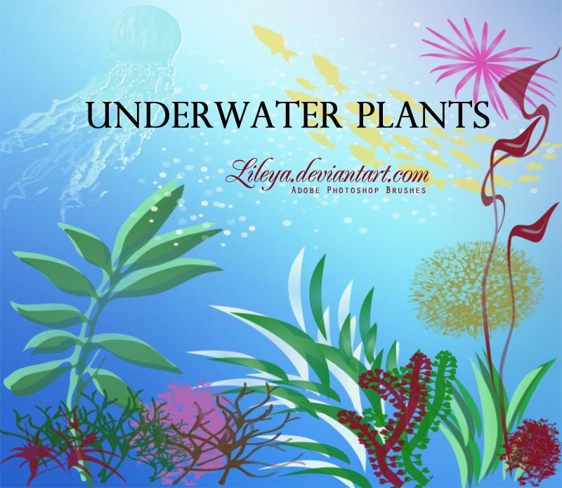 Underwater Plants by Lileya