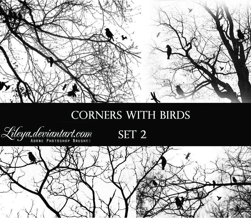 Corners with Birds - set 2
