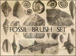 Fossil brush set