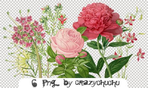 crazychuchu PNG 4