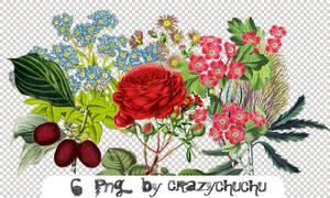 crazychuchu PNG 5