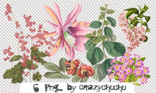 crazychuchu PNG 12 by crazychuchu