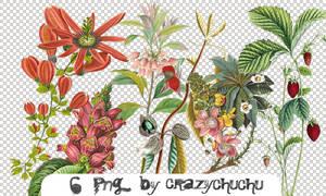 crazychuchu PNG 16