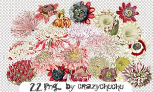 crazychuchu PNG 31