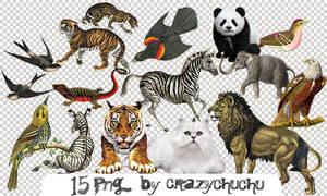 crazychuchu PNG 34