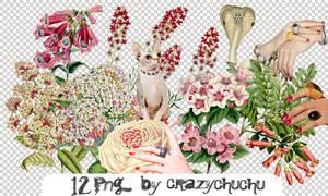crazychuchu PNG 36