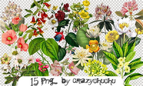 crazychuchu PNG 45 by crazychuchu