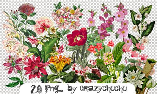 crazychuchu PNG 47 by crazychuchu