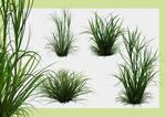 Grass Tail