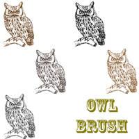 Owl Brush