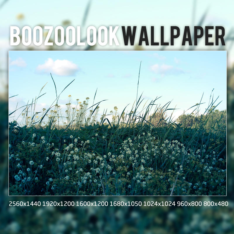 BooZooLook by DPRED