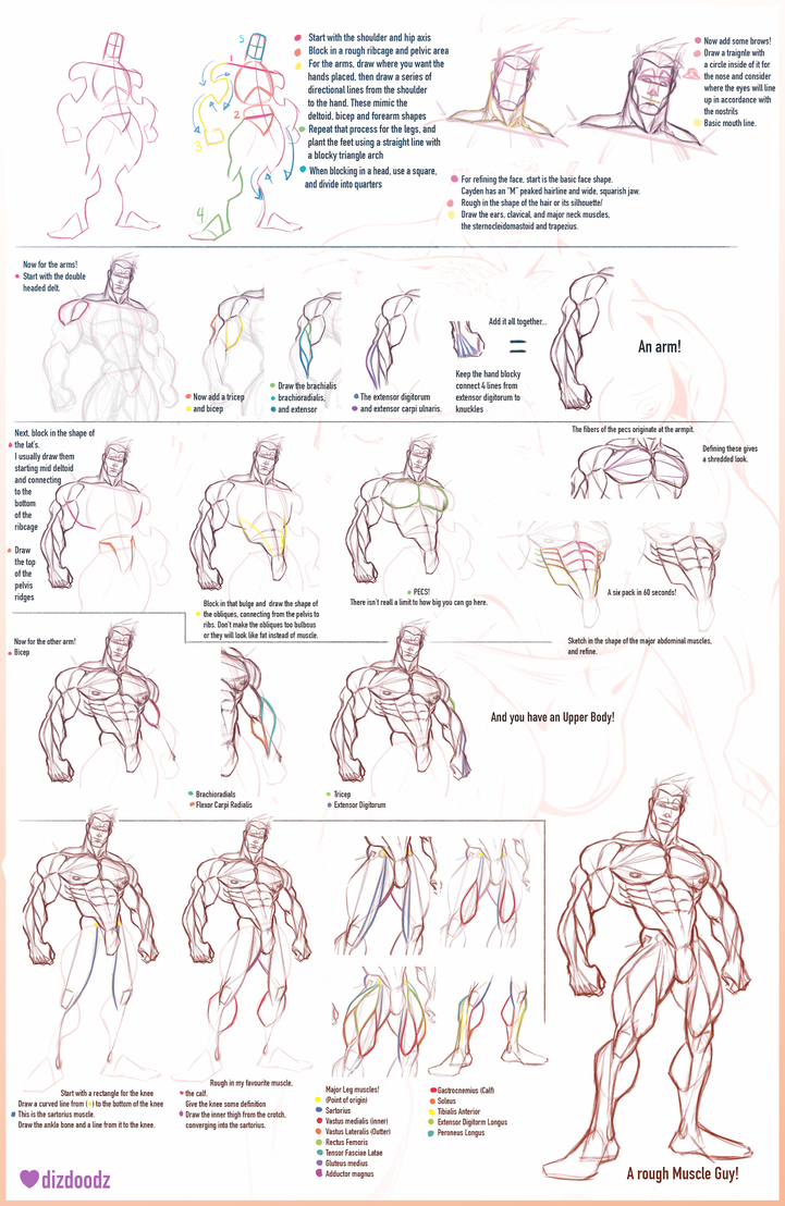 How To Draw Cayden And Male Anatomy Tutorial By Dizdoodz On Deviantart
