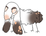 (C) Kiwi