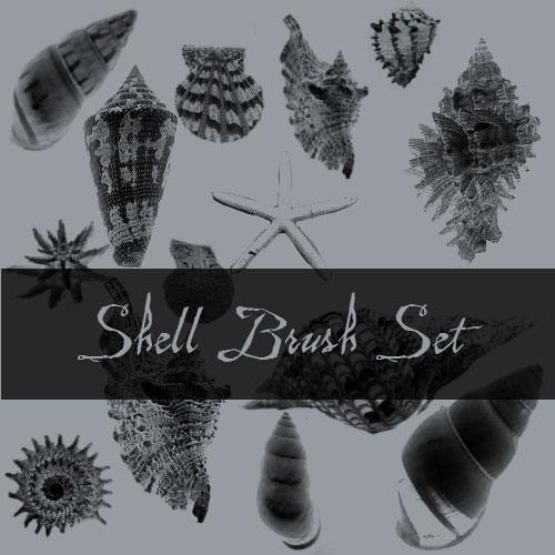 Shell Brushes