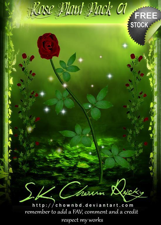 Rose Plant Pack 02