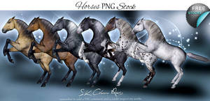 Horses PNG Stock