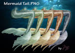 Mermaid Tail PNG