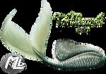 Tail Mermaid