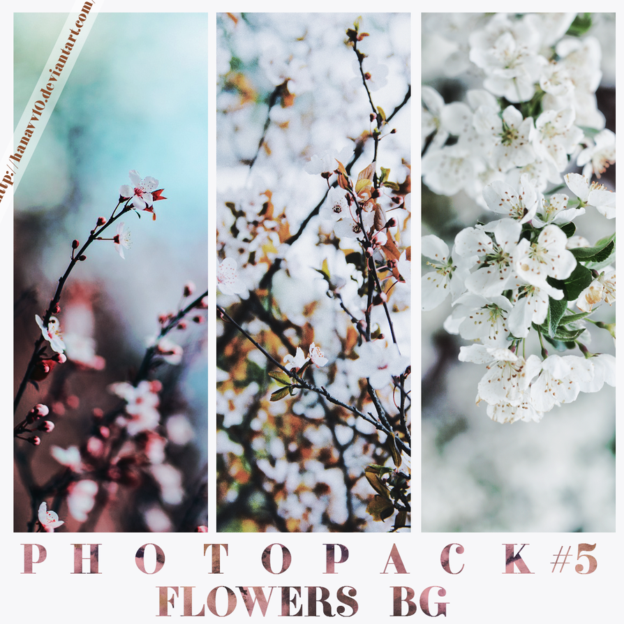 PTP #6 FLOWERS BACKGROUND by Hanavv10
